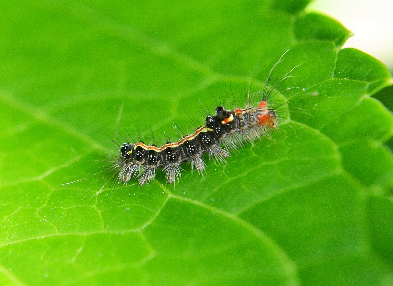 pest control all natural pest solutions to protect your garden