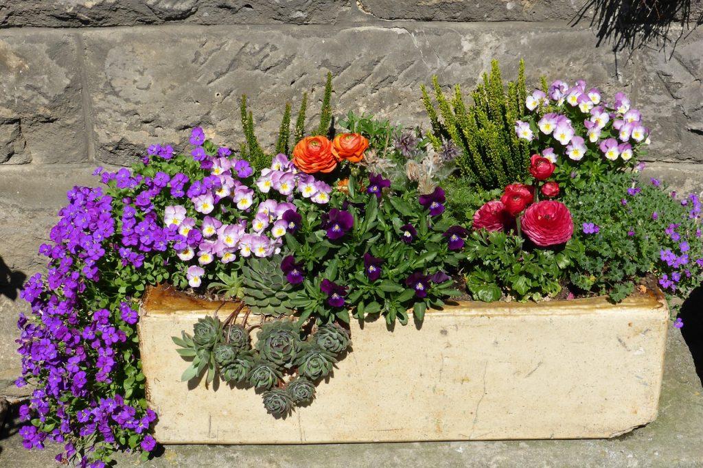 flowers-1391954_1280