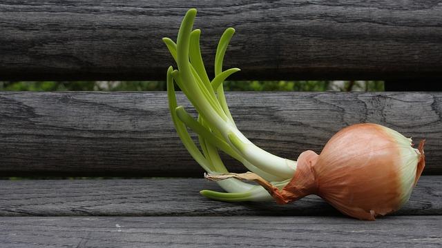 onion-341654_640