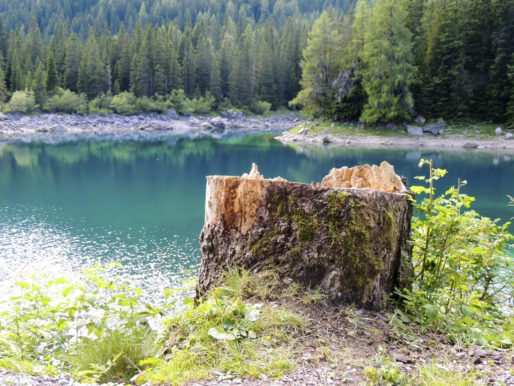 tree-stump-173091_1280