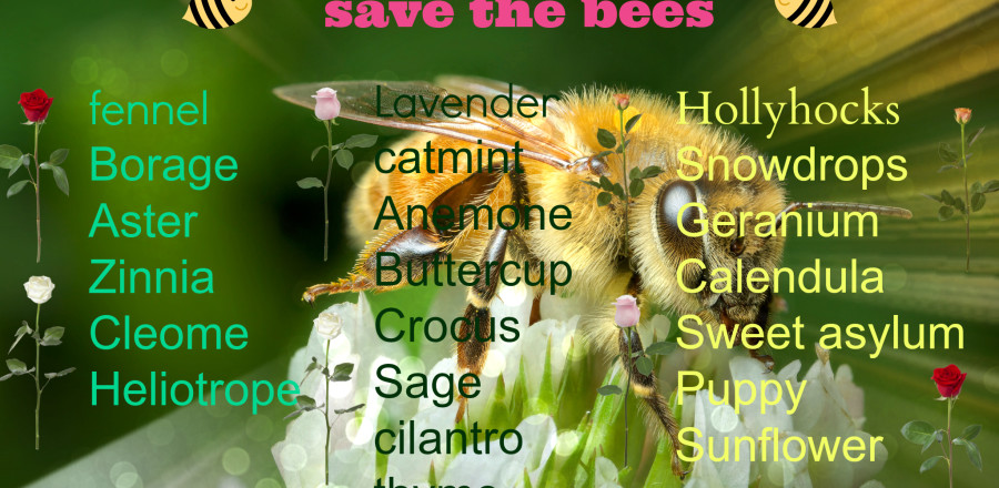 What to plant to save the bees