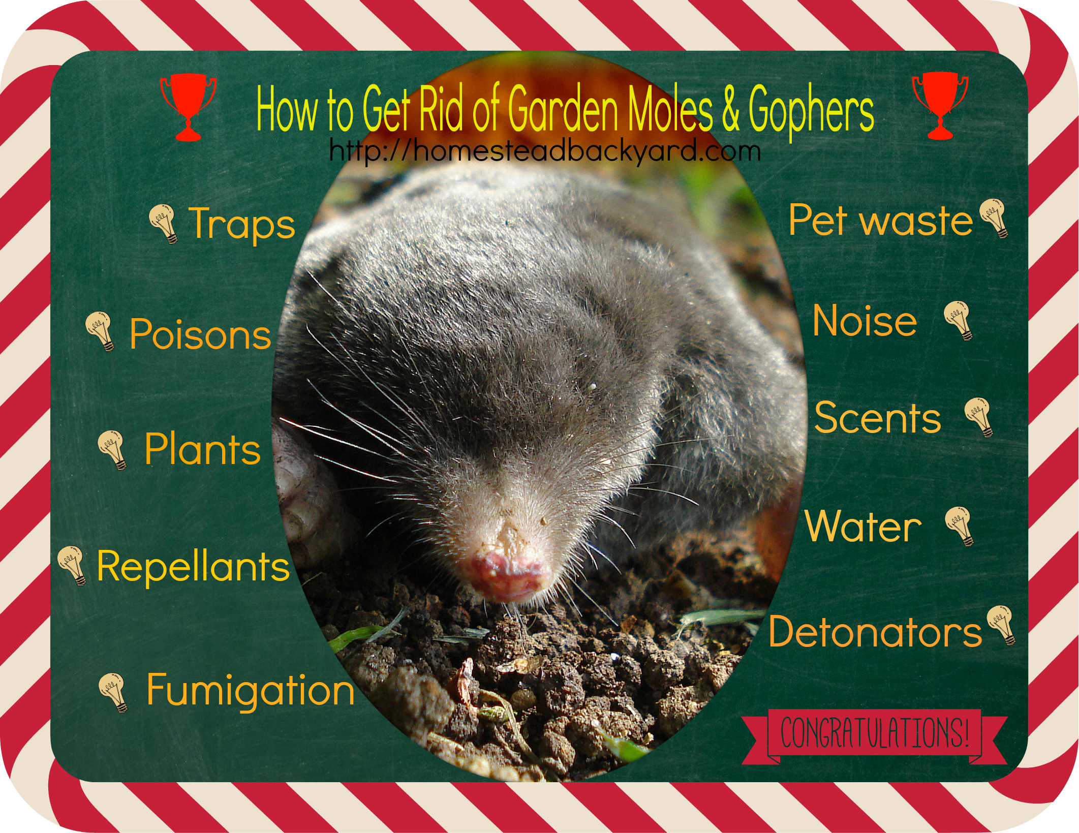 How to Get Rid of Garden Moles Gophers