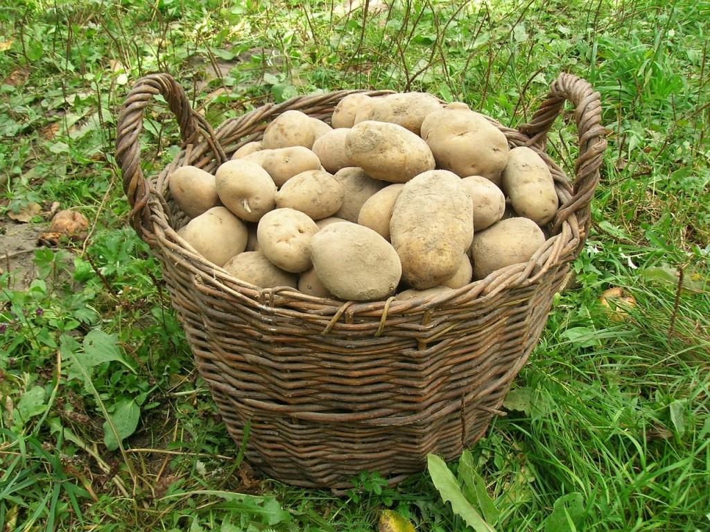 potatoes-501132_1280